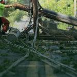 Вырубка деревьев под линиями электропередач