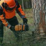 Avariiliste puude eemaldamine ja tormi tagajärgede likvideerimine